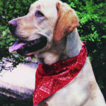 COOLMOR™ Cooling Dog Bandana
