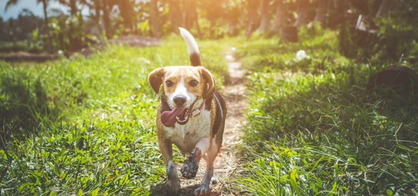 How to raise a healthy and happy dog